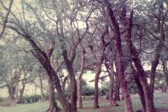 hopehall_garden